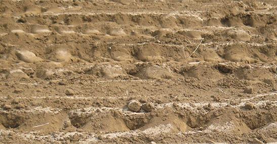 栃木の土壌と土づくり
